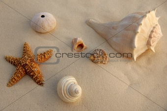 beautiful shells in the beach