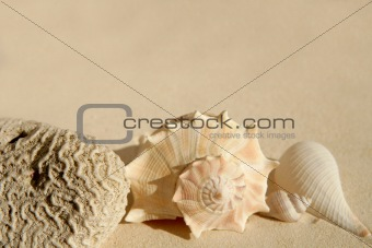 beautiful shells in the beach