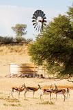 Herd of springbuck standing near waterhole