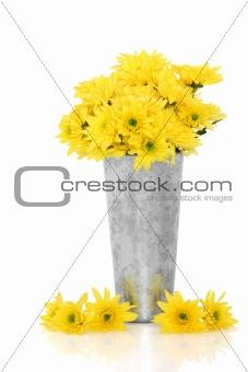 Chrysanthemum Flower Beauty