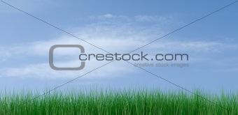 green grass on a blue sky