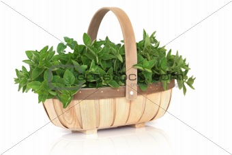 Oregano Herb Basket