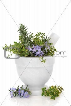 Rosemary and Thyme Herbs
