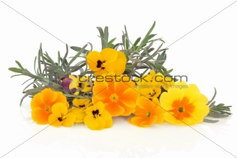 Lavender Herb and Viola Flowers