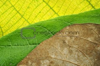 awesome colors of leaves texture