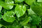 Spinach  background