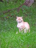 Beige cat in the grass