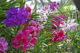 Many orchids