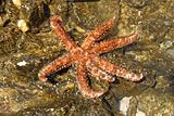 beautiful sea star on rock