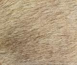 Closeup of the fur of a Kangaroo