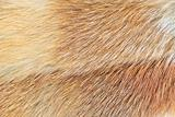 Mink (Mustela lutreola) fur background