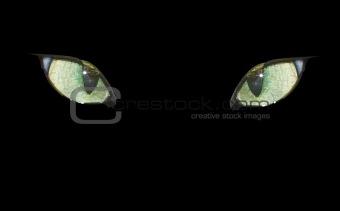 Cat eyes on the black.