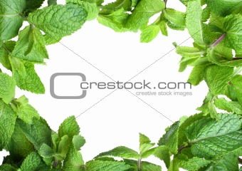 Frame of mint