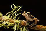 tree frog between moss