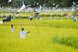 Scarecrows on rice field