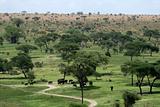 Elephant Habitat - Tarangire National Park. Tanzania, Africa