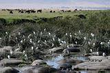 Water Hole - Ngorongoro Crater, Tanzania, Africa