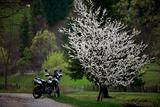 Spring motorcycle