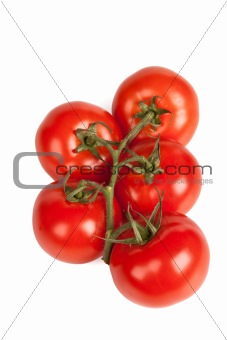 Branch of tomatoes isolated