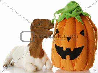 halloween goat