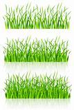 dense green grass