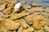 Rocks in tide pool