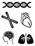 medical symbols of organ