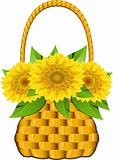 Basket sunflowers