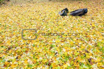 autumn background (yellow abscissed leafs)