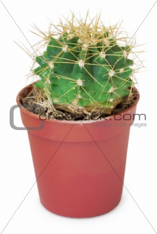 Ð«mall round cactus in pot