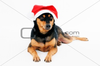 Portrait of a cute dog wearing Santa hat
