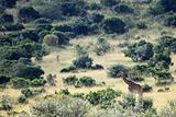Maasai Mara Reserve - Kenya