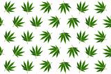 Hemp leaves background