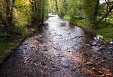 stream meandering through a meadow