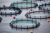 Aquaculture