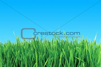green grass over blue sky - abstract background