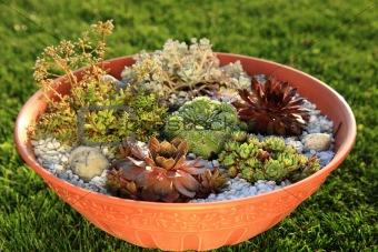 Small rock garden