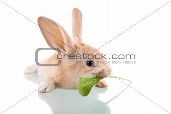 beautiful bunny eating