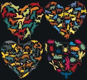 Animal hearts