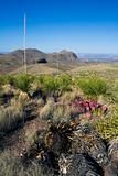 Landscape of Big Bend National Park.
