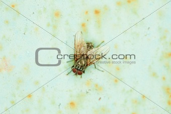 Small fly basks in sun sitting on an wall