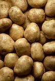 Potatoes filling frame