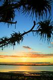 Sunrise Against Pandanus