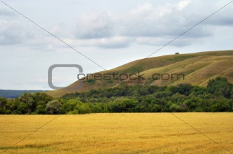 Green field and yellow field