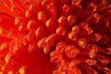 Orange flower closeup