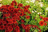 Many beautiful flowers