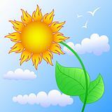 sun as flower