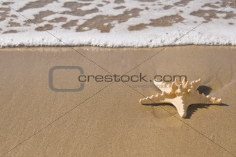Starfish by the ocean