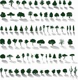 Vector trees - Silhouettes with shadows
