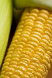 macro of fresh maize corns
